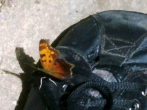 butterfly on shoe closeup-1